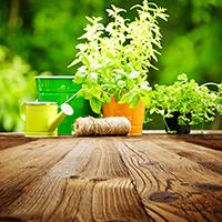 Planter de la végétation