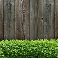 Planter des arbustes