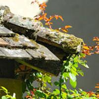 Bannir la moisissure de toit illico travaux - Moisissure javel ...