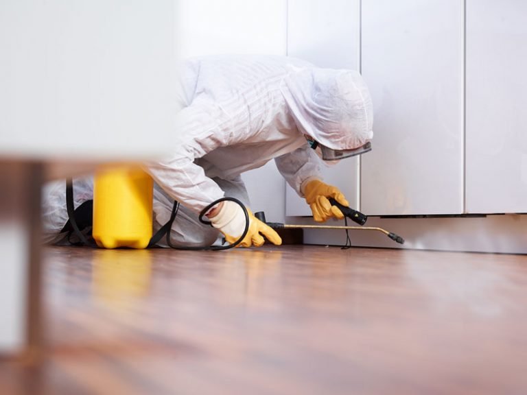 Rénovation de votre maison : comment se débarrasser de la mérule ?