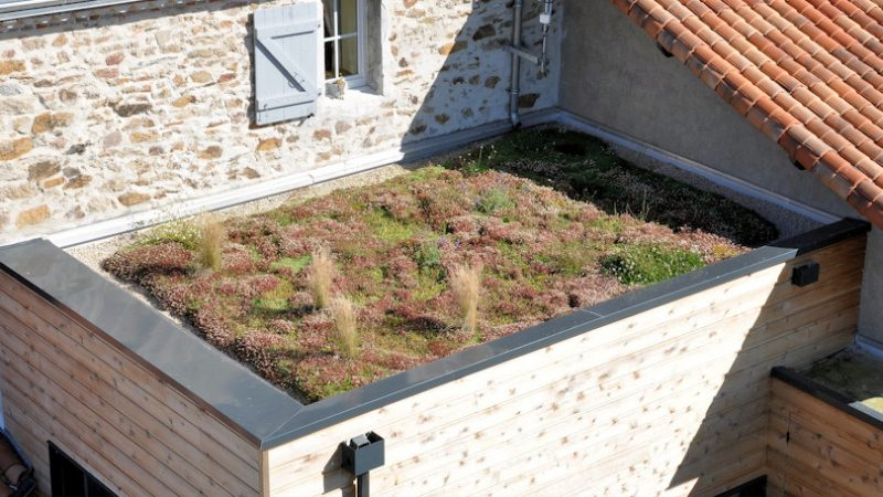 extension toit plat végétalisé
