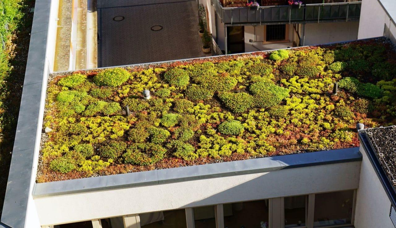 toit terrasse végétalisé