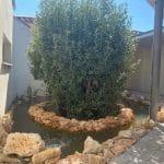 Mise en eau du bassin - Aménagement extérieur d'un patio près de Monptellier