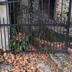 Portail avec racines du tilleul - Aménagements extérieurs à Glaine Montaigut